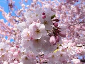 春には散剤やシロップ剤の味見大会がある